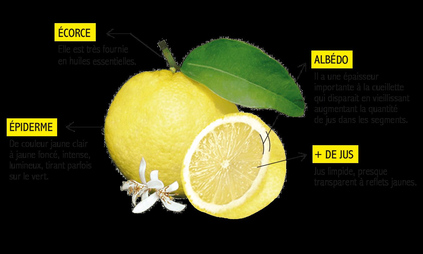 Pourquoi le citron de Menton est-il unique ? - Citron de Menton